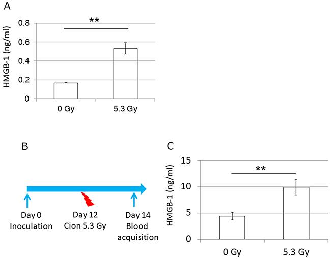 Release of HMGB-1 in vitro and in vivo.