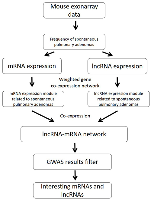 The pipeline of integration analysis to identify mRNA/lncRNA co-expression networks for spontaneous lung cancer susceptibility.