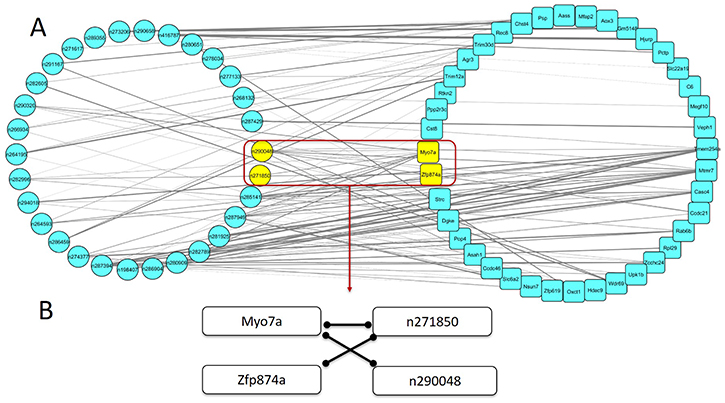 The mRNA-lncRNA co-expression network associated with spontaneous lung cancer susceptibility.