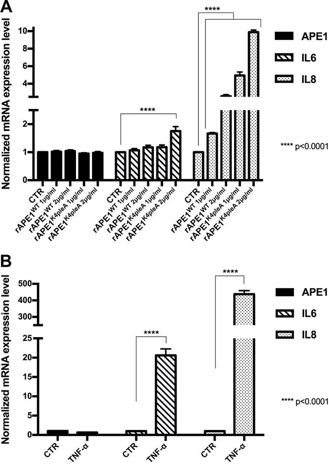 Recombinant APE1 promotes IL-6 and IL-8 mRNA expression in JHH-6 HCC cell line.