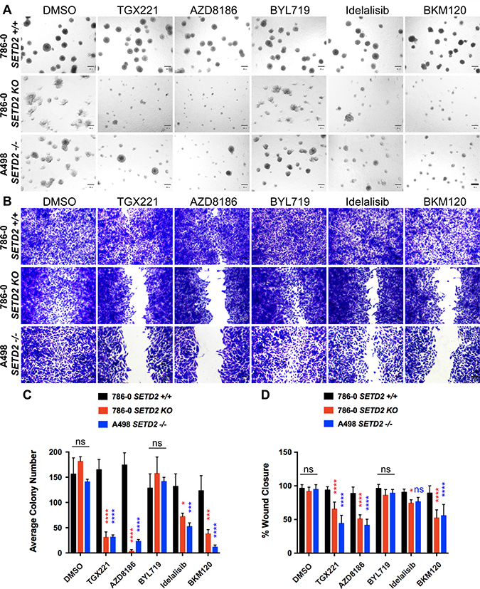 PI3Kβ-specific inhibitors TGX221 and AZD8186 abrogate spheroid formation and cell migration in SETD2 deficient ccRCC-derived cells.