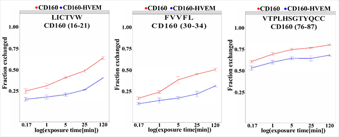 Regions of CD160 protein with important changes in deuteration level upon interaction with HVEM.