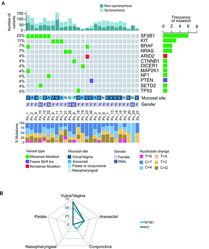 Mutational landscape of 27 melanoma patients across different mucosal sites.