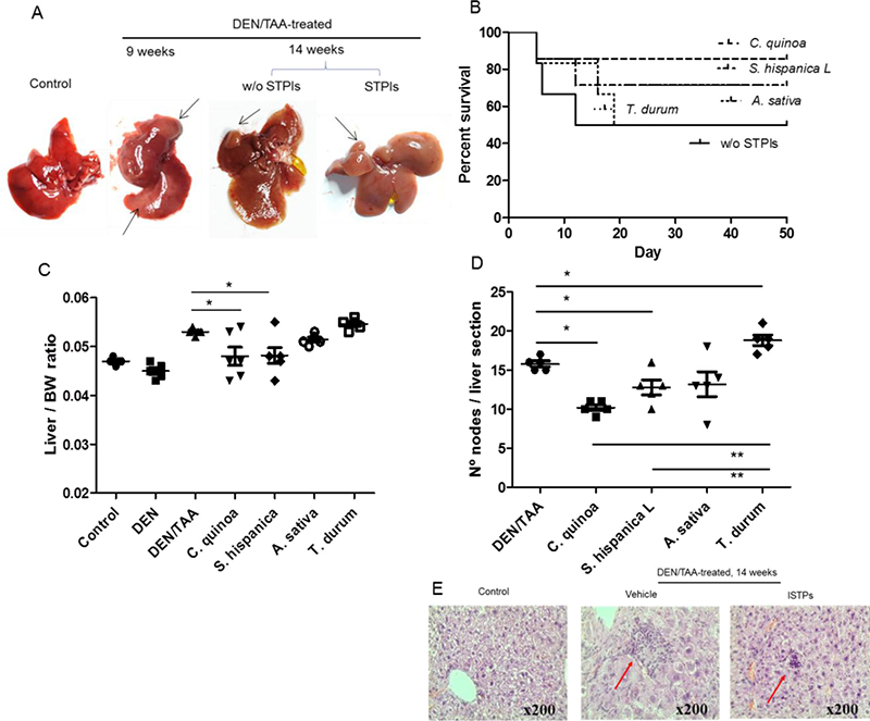 Co-administration of diethylnitrosamine (DEN) and the hepatotoxin thioacetamide (TAA) promotes liver tumor development in mice.