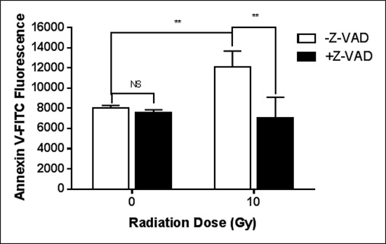 Caspase is critical for the radiation-induced exposure of PS.