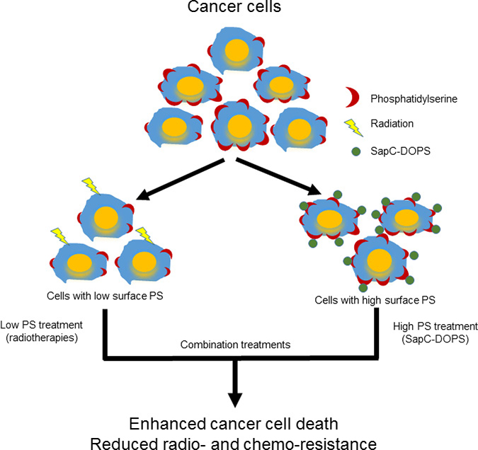 Schema 1: Phosphatidylserine-selected therapies of SapC-DOPS nanovesicles and radiation to enhance cancer cell death.