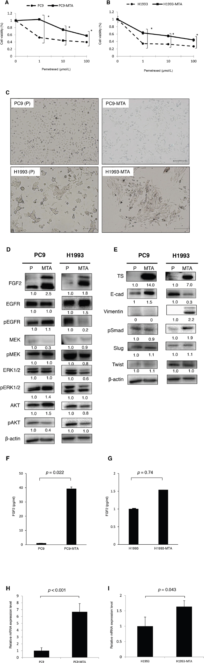 Characteristics of pemetrexed-resistant lung cancer sublines and their parental cells.