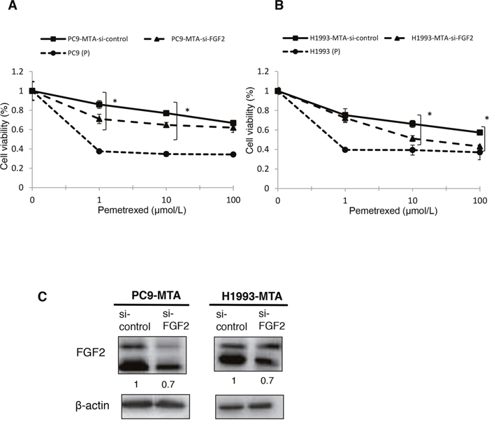 Effects of FGF2 knockdown in pemetrexed-resistant lung cancer cells.