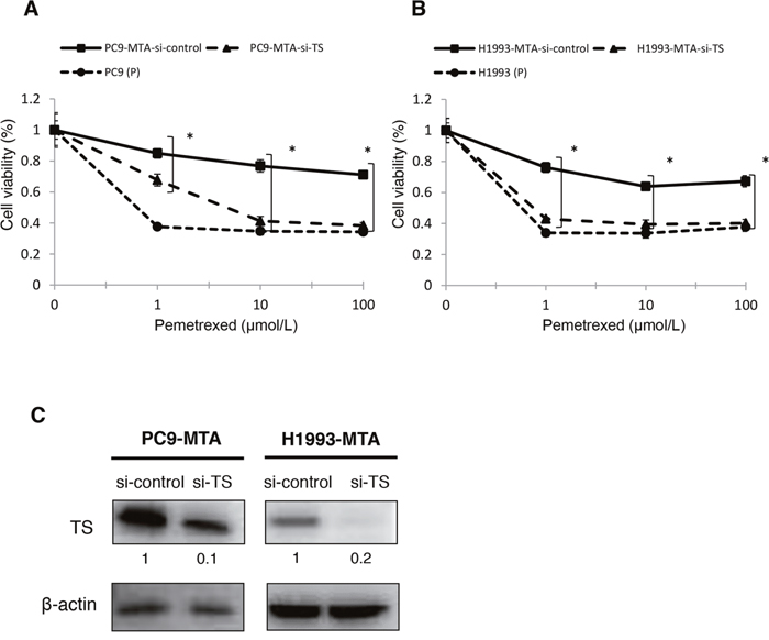 Effects of TS knockdown in pemetrexed-resistant lung cancer cells.