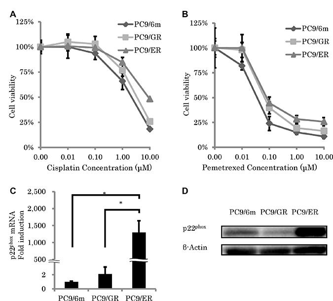 Chemosensitivity and expression of p22phox in epidermal growth factor receptor–tyrosine kinase inhibitor (EGFR-TKI)–resistant lung adenocarcinoma cells.