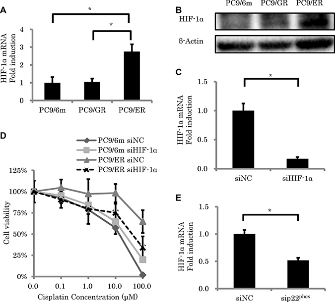 The effect of HIF-1α knockdown on sensitivity to cisplatin-induced cytotoxicity.