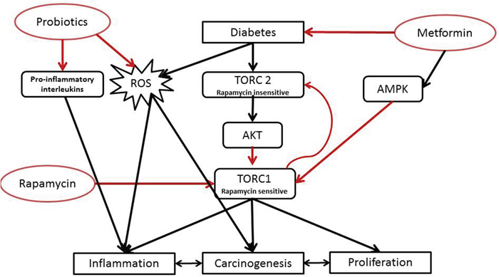 Proposed mechanism of action of the tri-therapy.