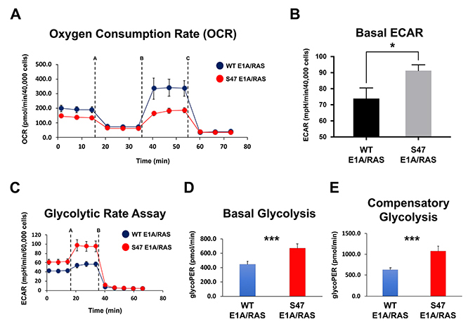 Increased use of glycolysis in tumor cells with the S47 variant of p53.