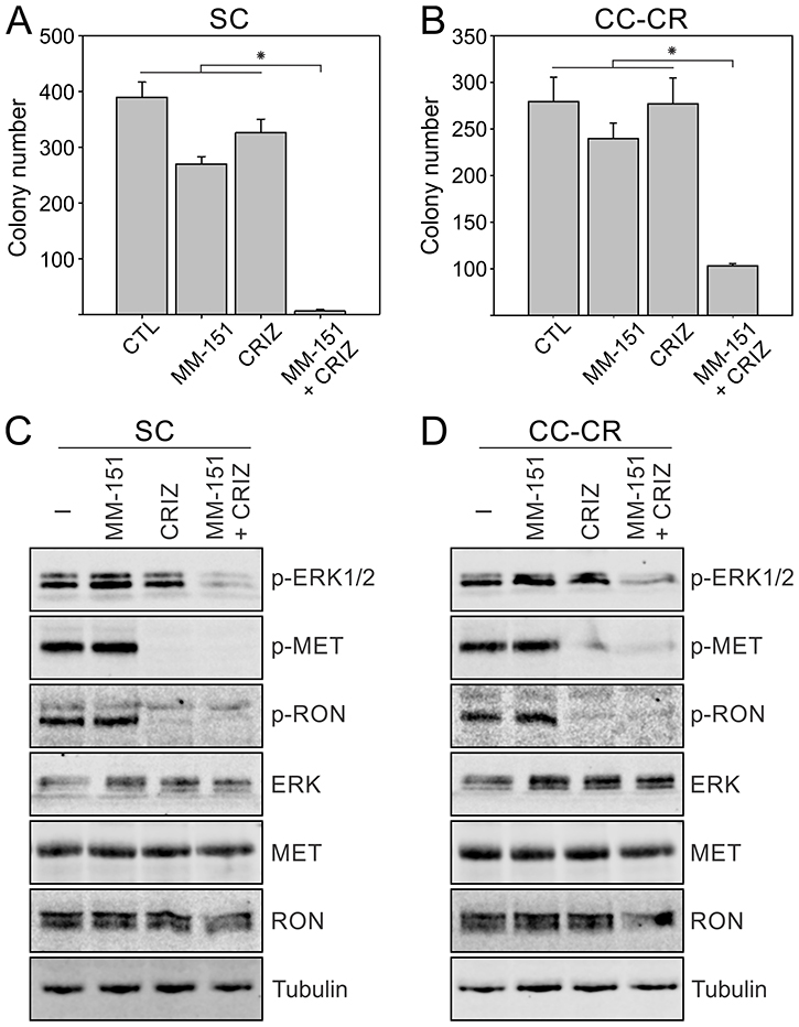 Overcoming MM-151 resistance in SC and CC-CR cells by crizotinib.