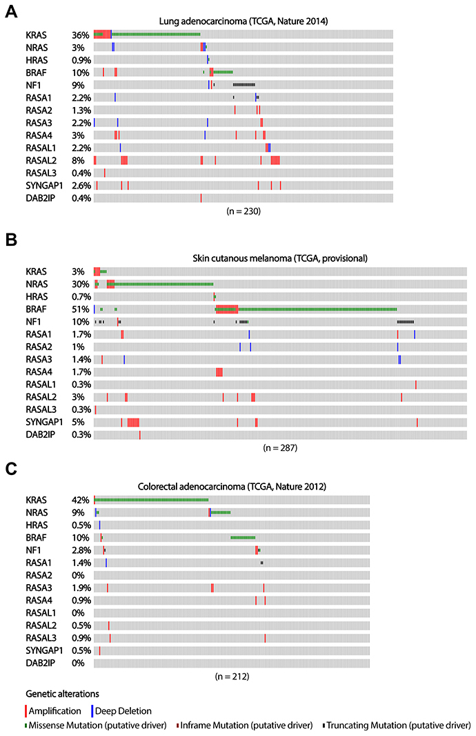 The occurrence of RASGAP and oncogenic mutations in the MAPK signaling pathway in lung adenocarcinoma, melanoma and colorectal adenocarcinoma.