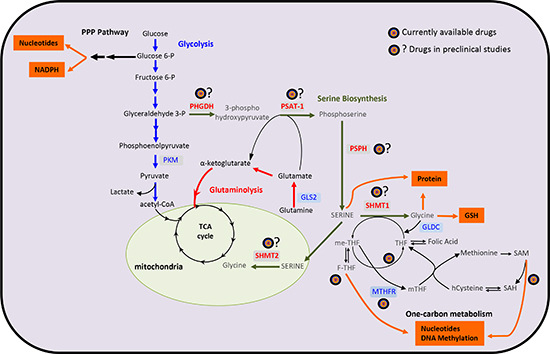 A schematic overview of the metabolic pathways involved in cancer biology.