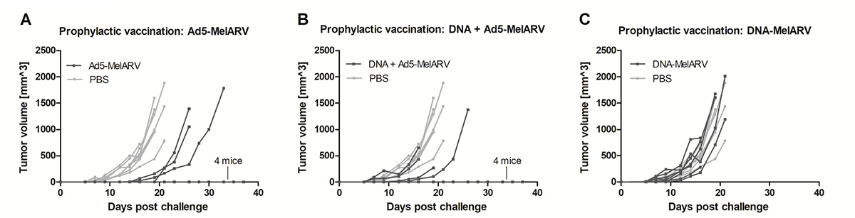 Tumor protection in prophylactically vaccinated mice.