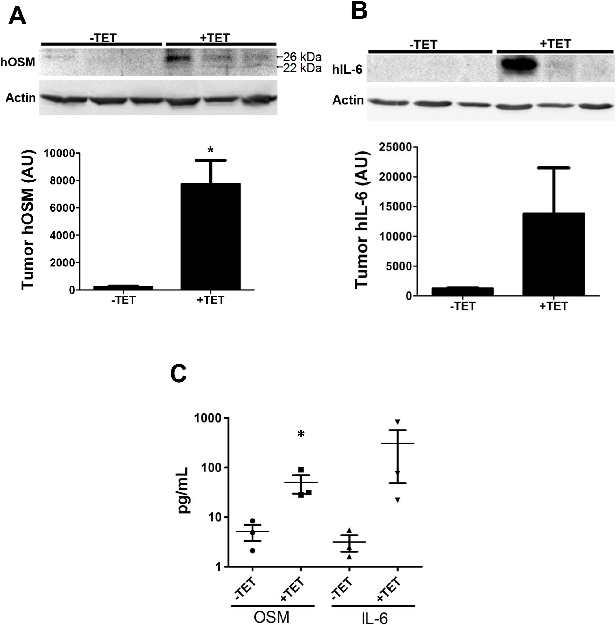 OSM induces IL-6 in an animal model of human breast cancer.