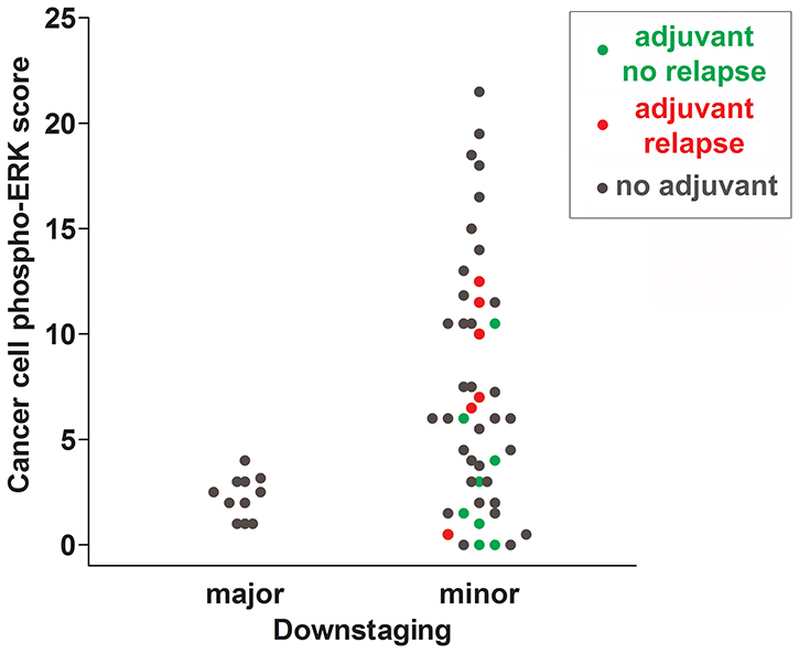 Scattergram summarizing cancer cell phospho-ERK scores for all individuals of cohort 1.