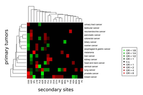 Models for prediction of the primary cancer sites from secondary cancer sites (metastases).