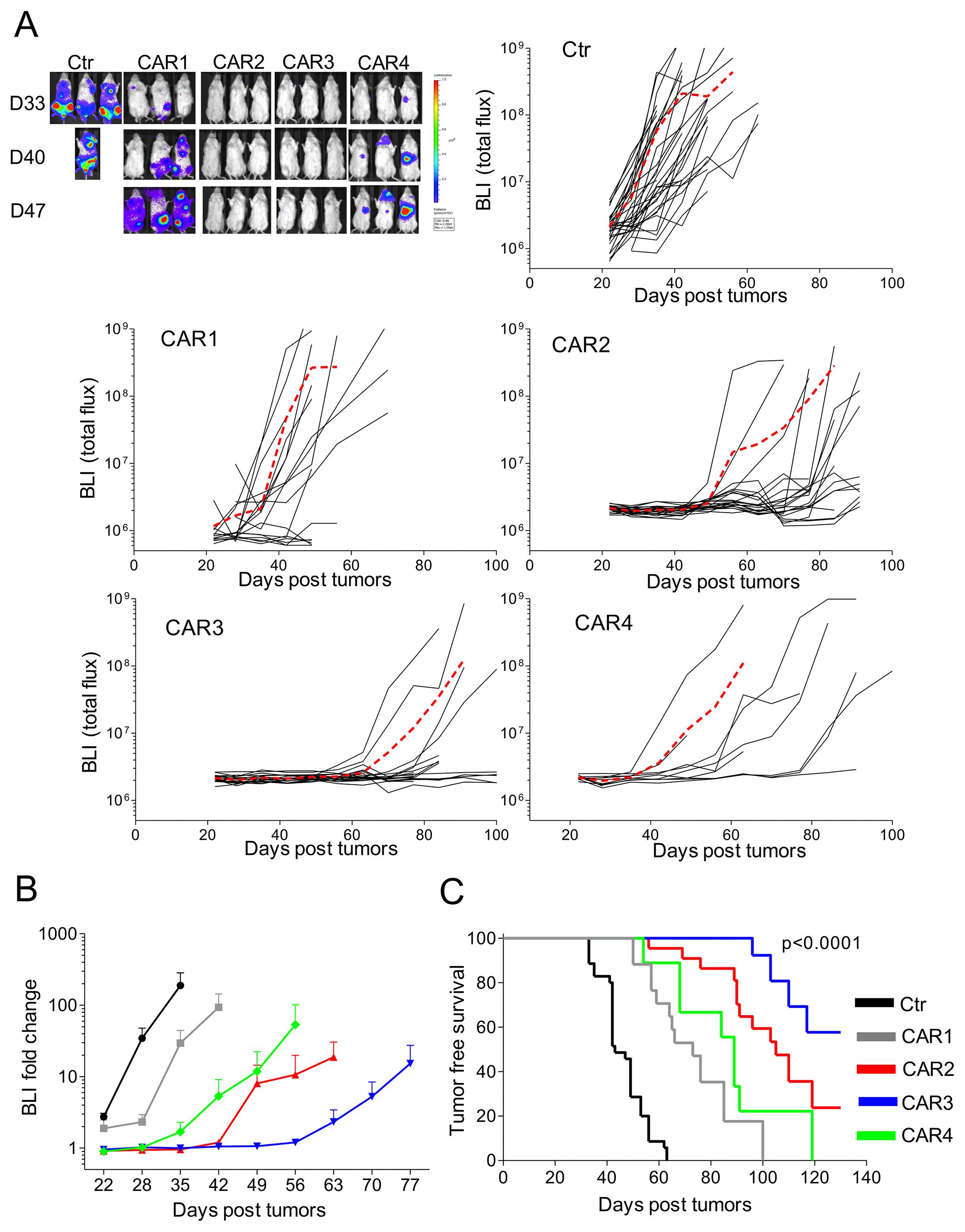 In vivo antitumor activity of CD138.CAR-Ts.