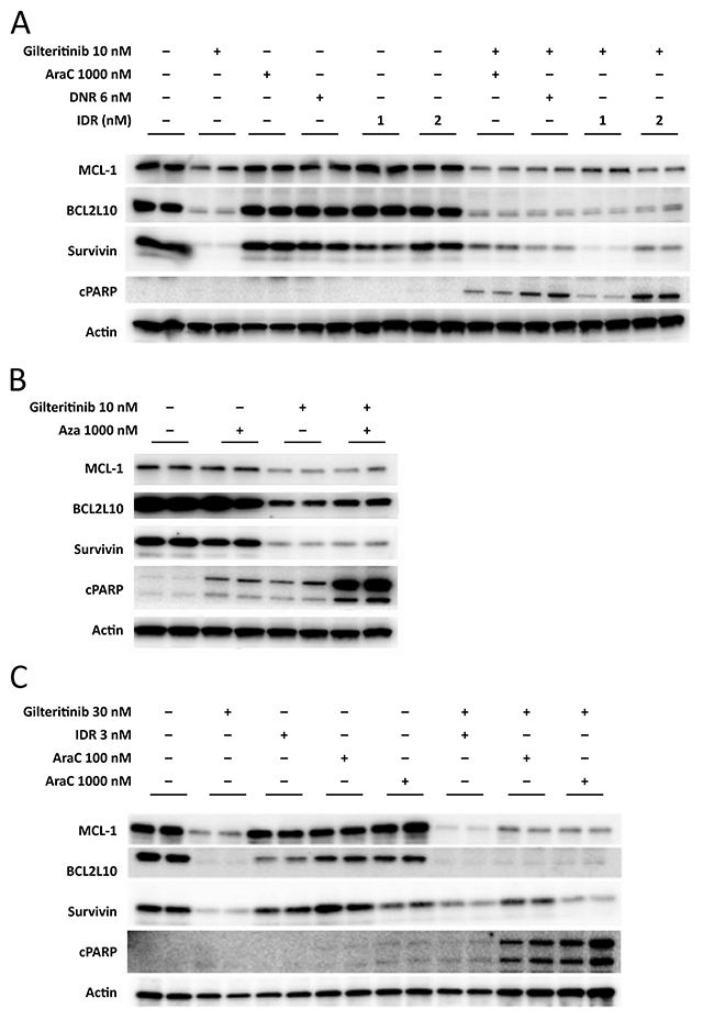 Inhibition of anti-apoptotic protein expression in MV4-11 cells and MOLM-13 cells.