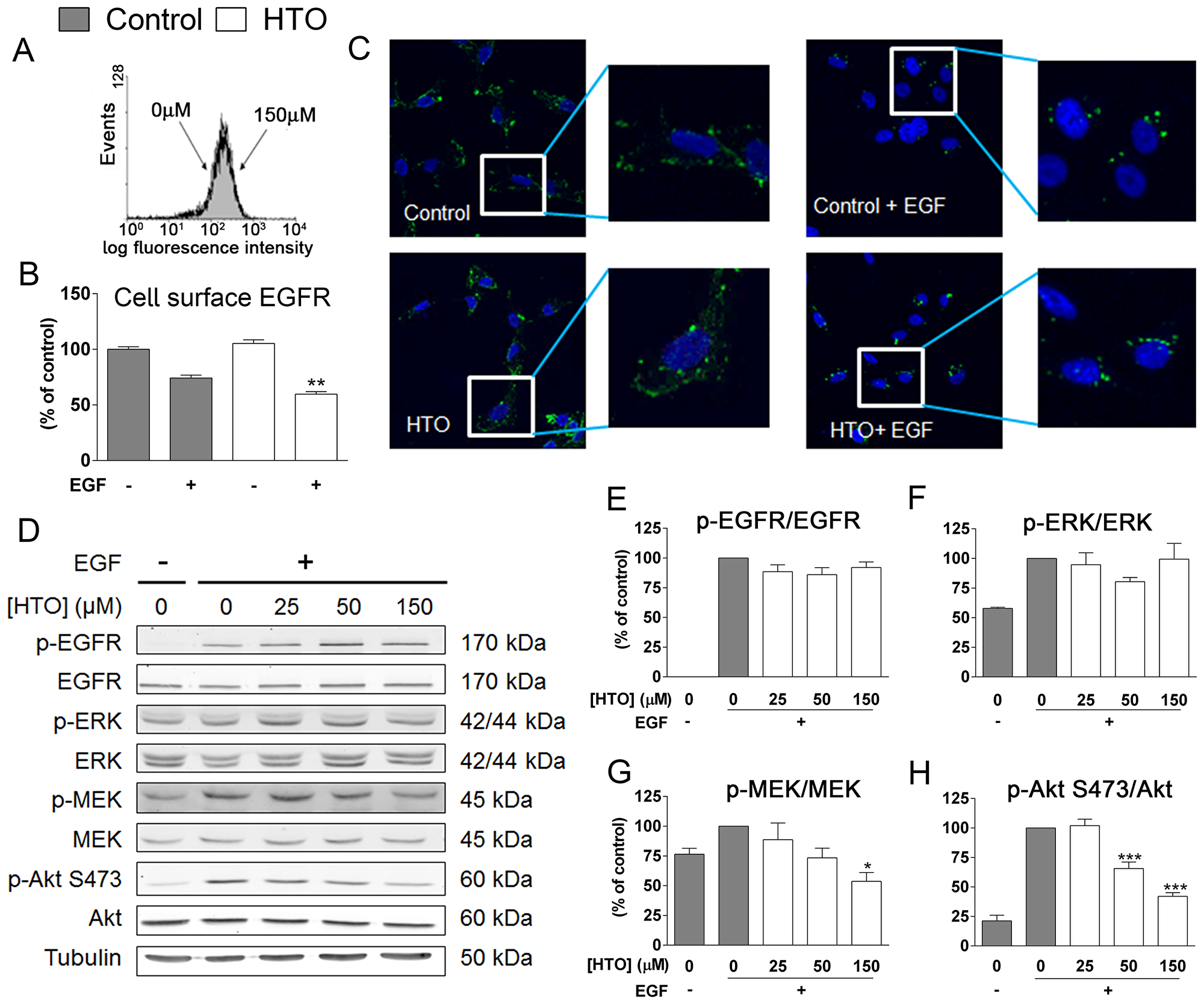 The effect of HTO on EGFR signaling.