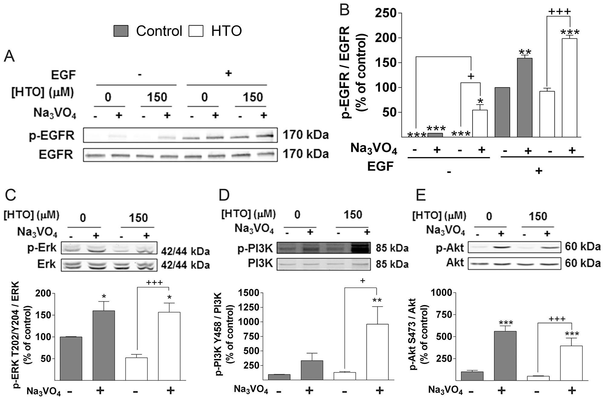 Effect of HTO on phosphatases.