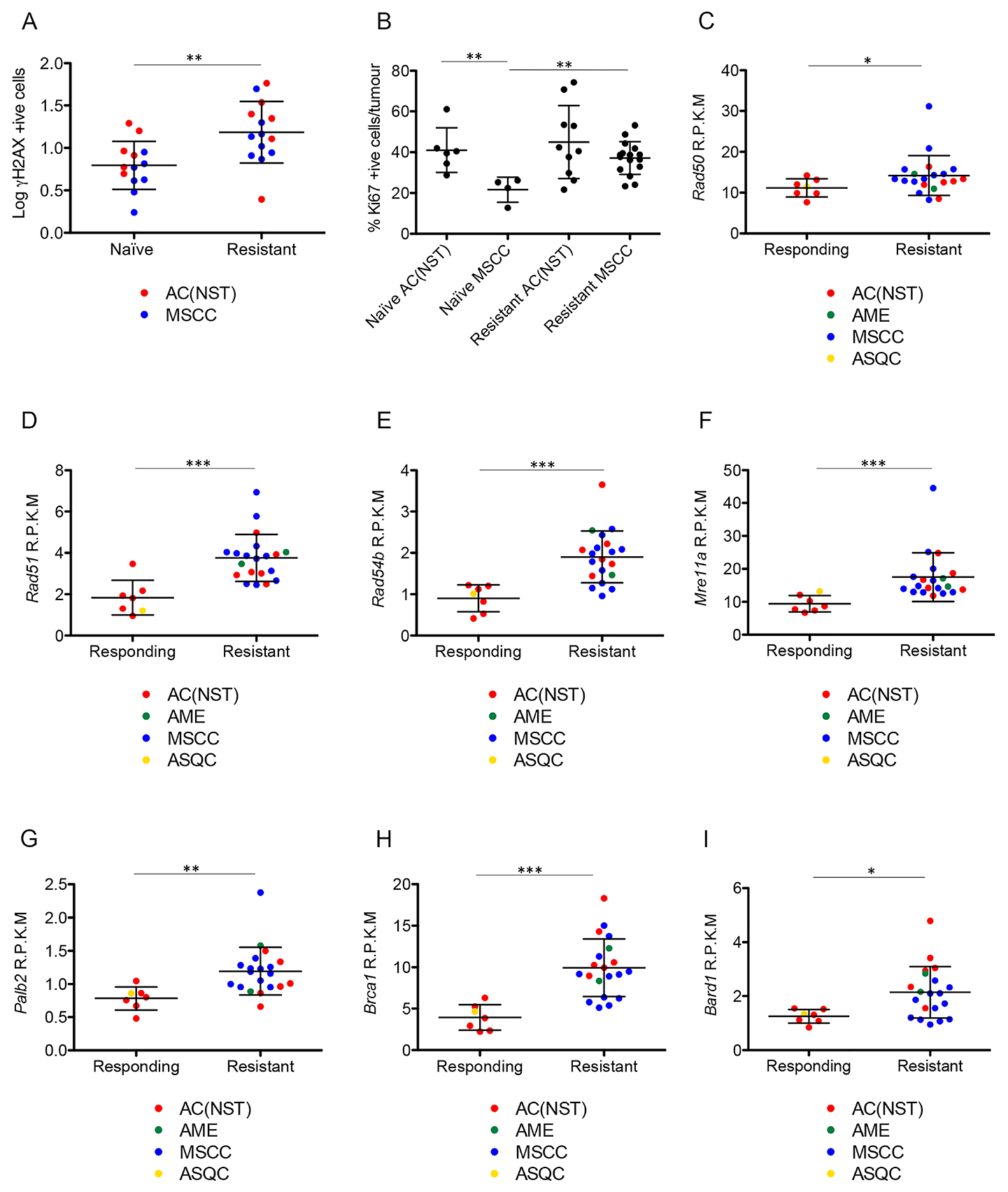 Olaparib-resistant tumours have DNA damage and show elevated expression of HR-associated genes.