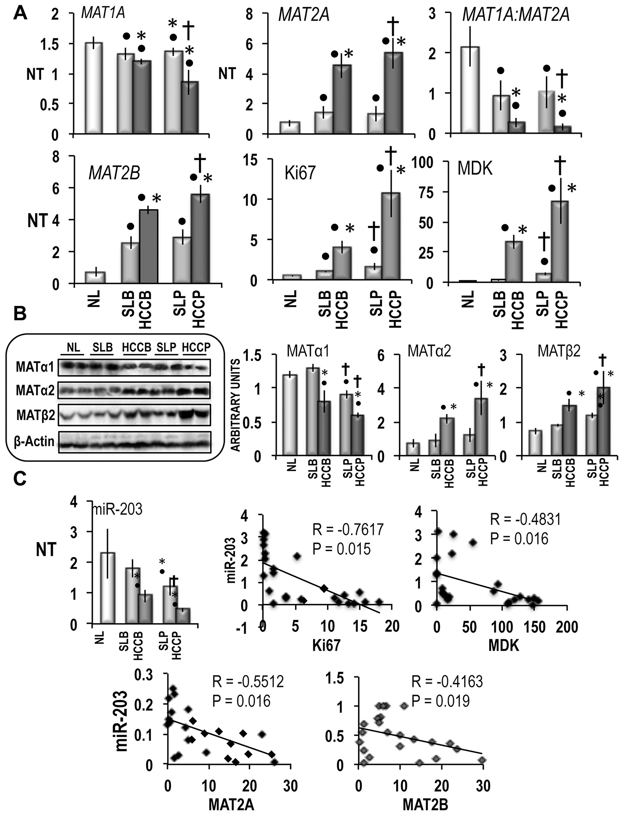MAT1A, MAT2A, MAT2B and miR-203 expression in human HCC with different prognosis.