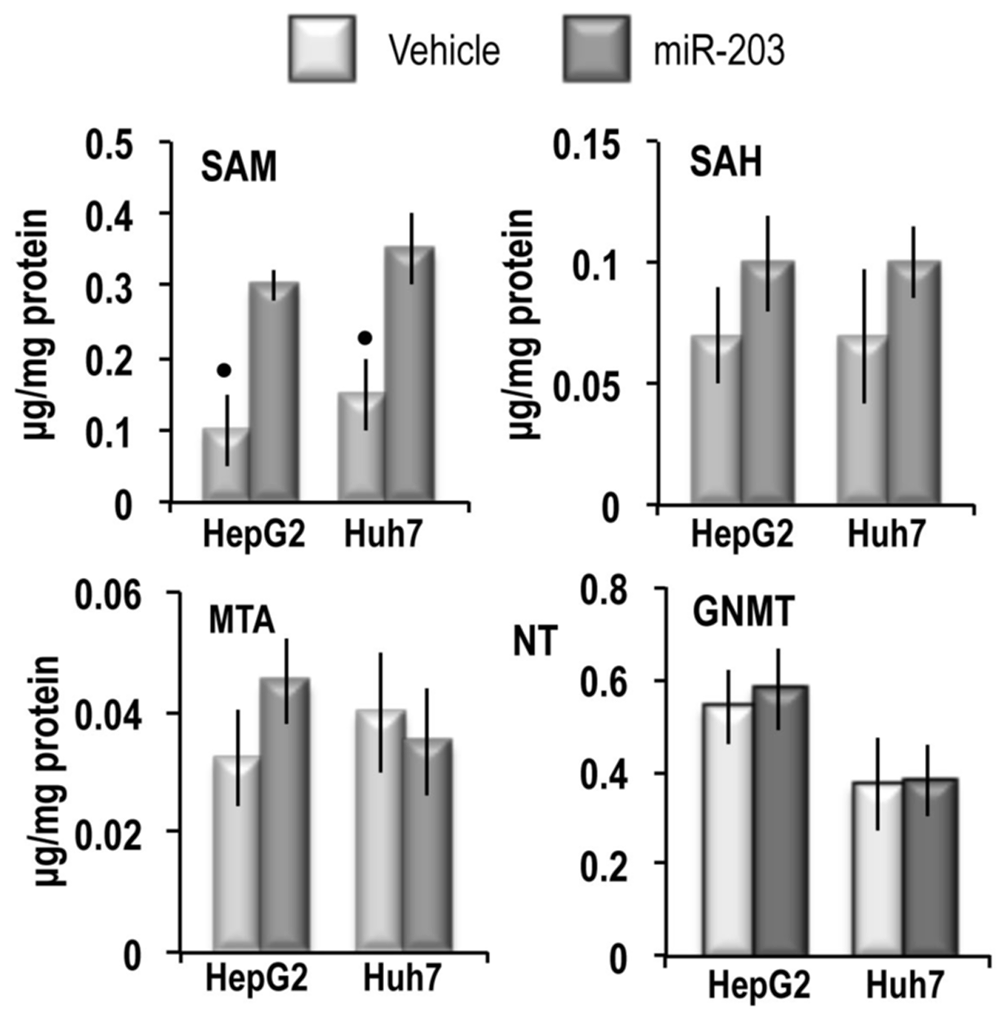 SAM, SAH and MTA content and GNMT expression in HepG2 and Huh7 cell lines.