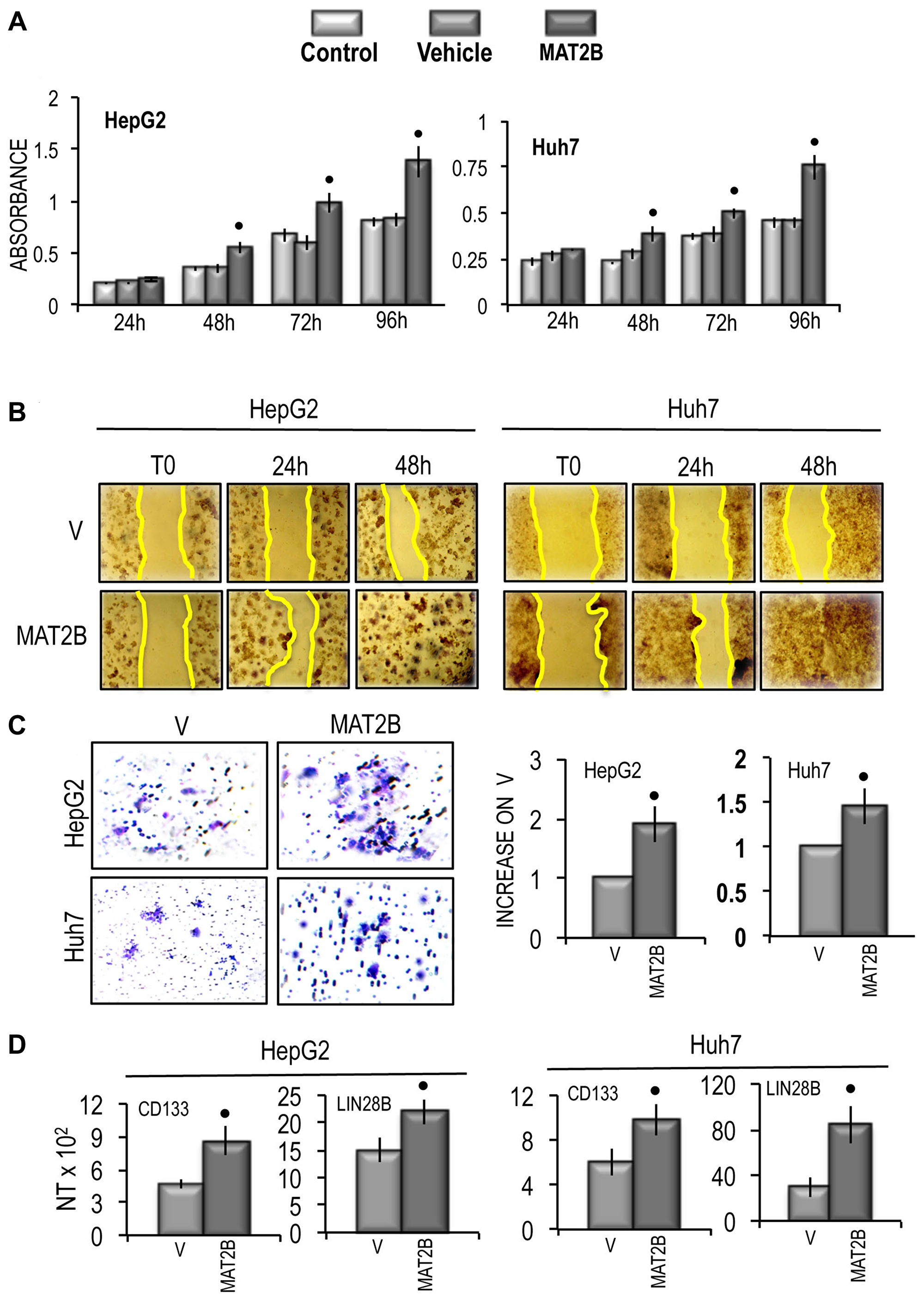 Effect of MAT2B transfection on HepG2 and Huh7 cell viability, cell migration and cell invasivity in vitro and of the expression of CD133 and LIN28B.