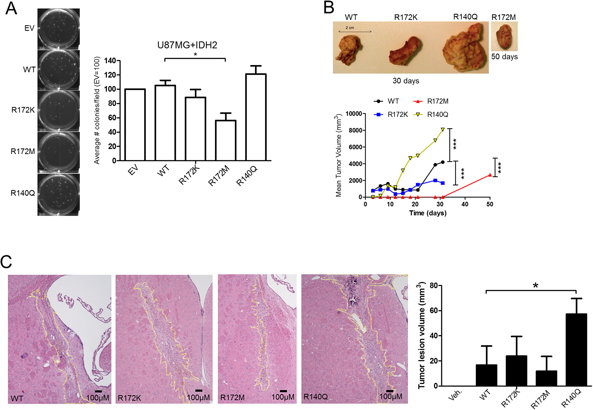 IDH2-R172M and IDH2-R140Q affect tumor growth.