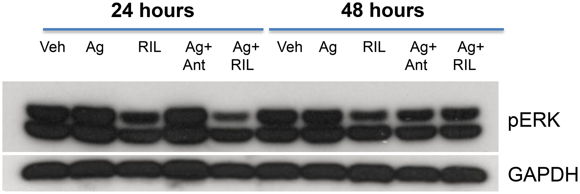GRM3 in U87 cells is functional.