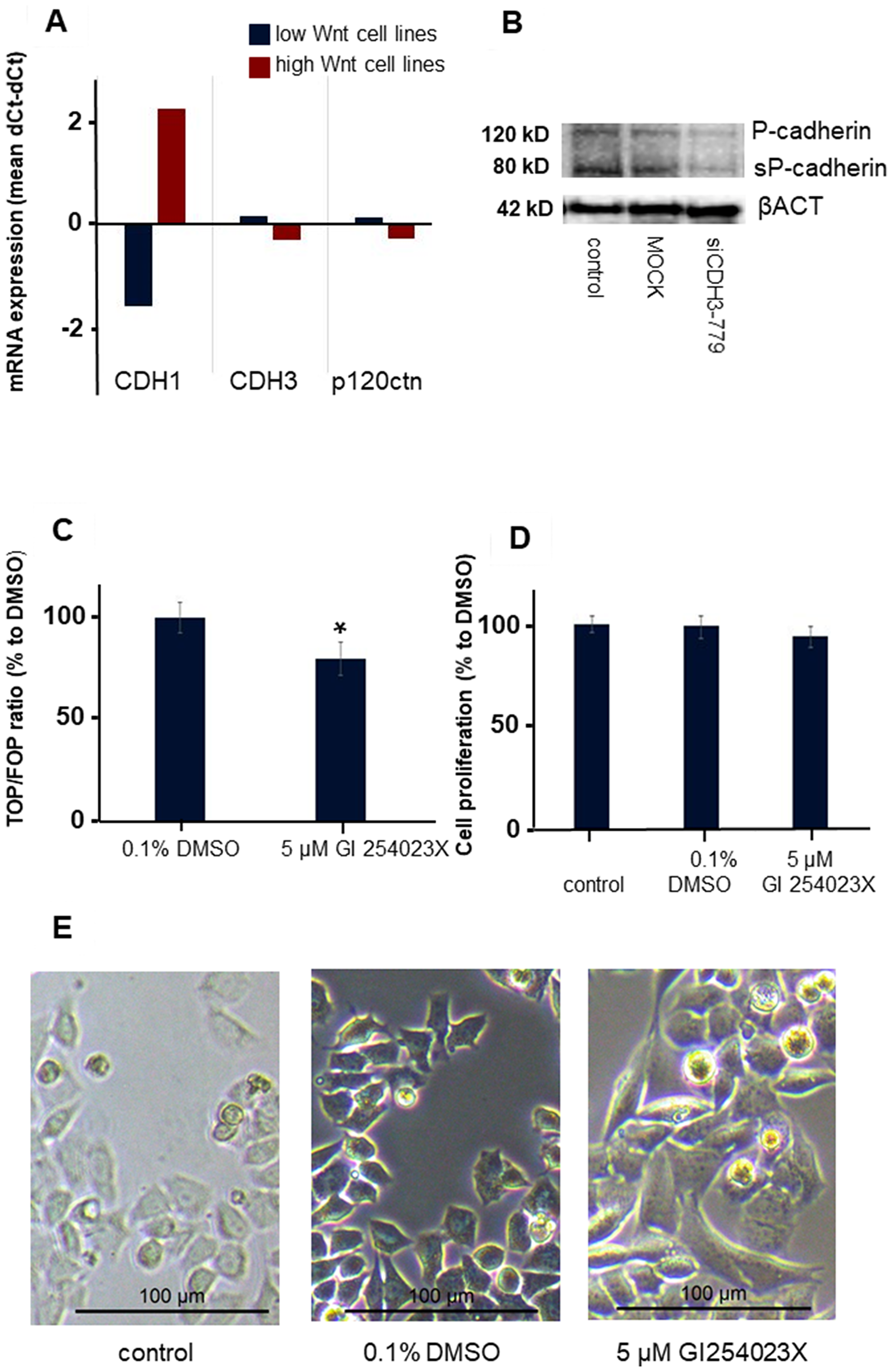 The effect of ADAM10 inhibitor GI 254023X in the CMT-U27 canine mammary tumor cell line.