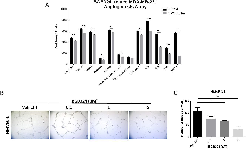 A selective Axl inhibitor, BGB324, suppresses angiogenic phenotypes.