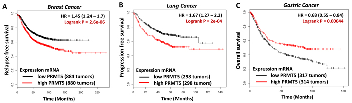 Kaplan-Meier analysis comparing survival of a cohort of breast (A), lung (B) or gastric cancer (C), separated into low or high PRMT5 expression as indicated using appropriate databases [13].