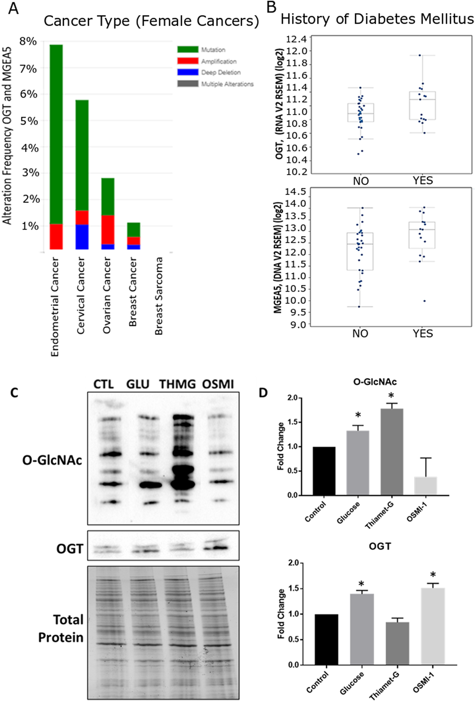 Meta-analysis of O-GlcNAc alteration in female cancers and validation of global O-GlcNAc modification in Ishikawa cells.