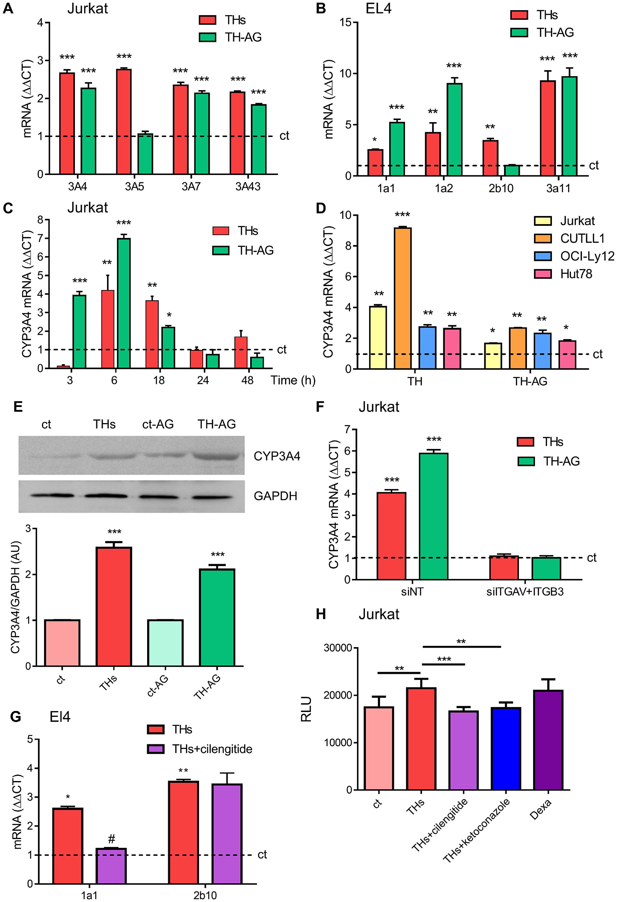 Thyroid hormones modulation of CYP P450 levels.