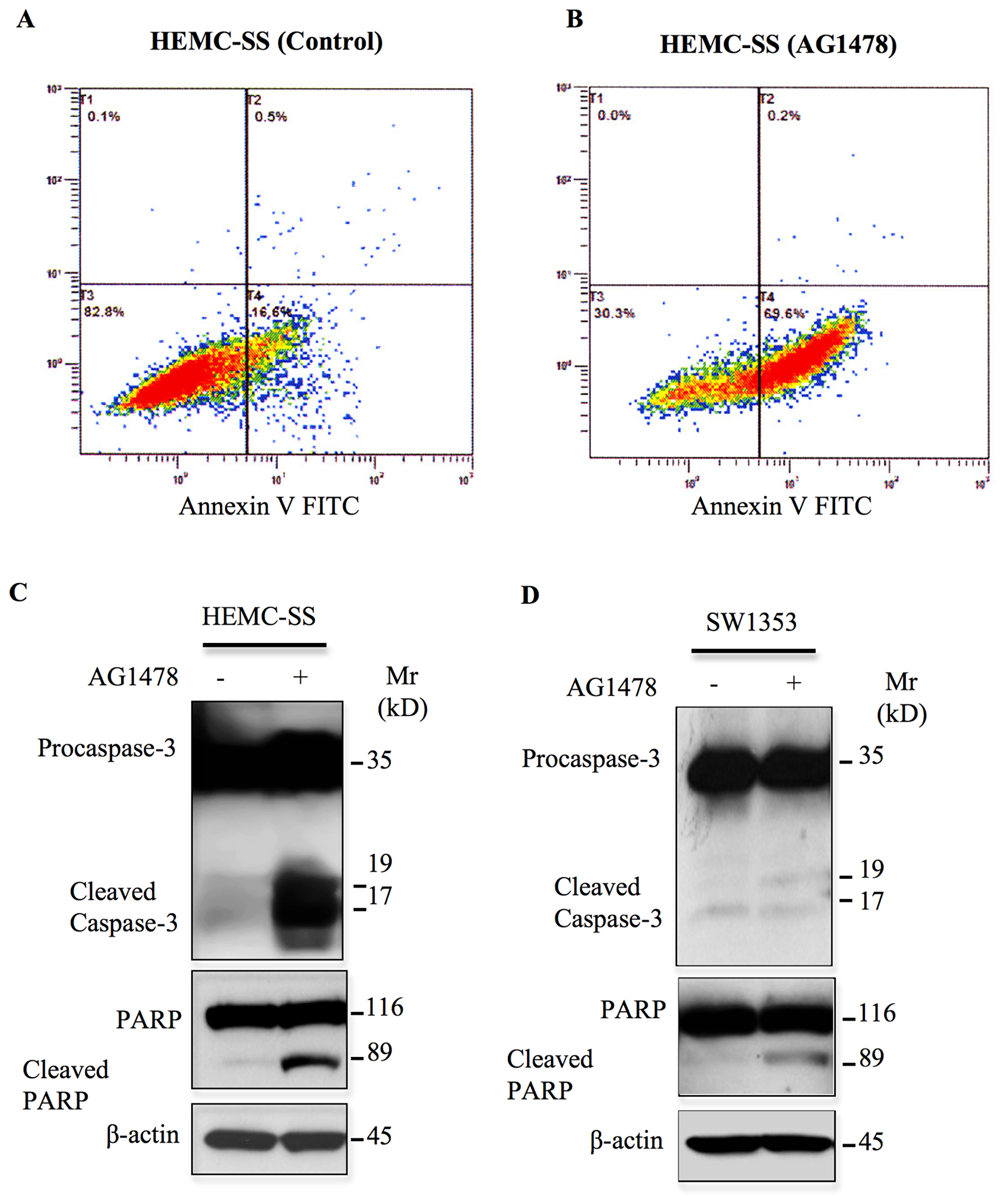 AG1478 induces apoptosis in chondrosarcoma cells.