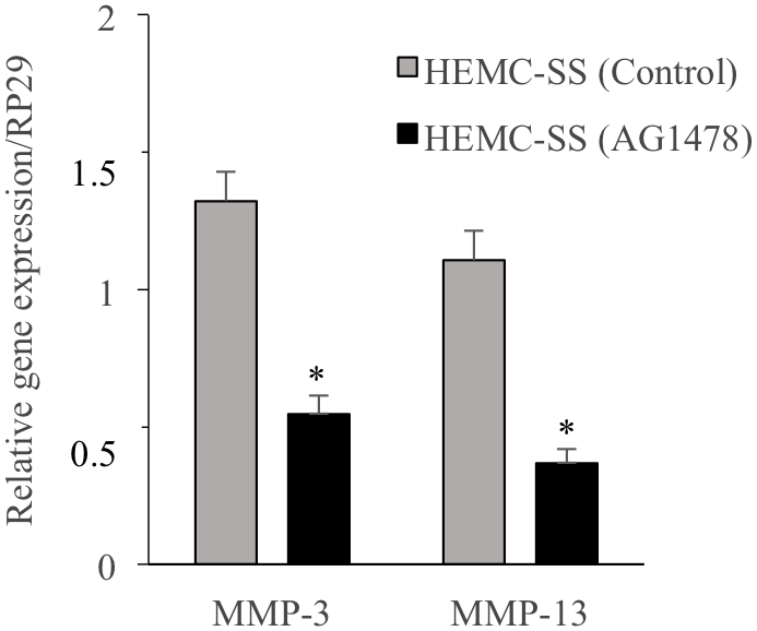Inhibition of EGFR down-regulates the expression of the Matrix Metalloproteinases MMP3 and MMP13.