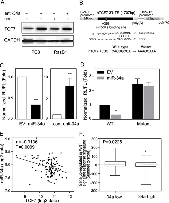 miR-34a regulates TCF7 expression by targeting TCF7 3′UTR in prostate cancer cells.