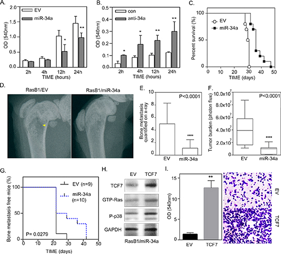 miR-34a regulates the invasion of Ras-activated prostate cancer cells in vitro and bone metastasis in vivo.