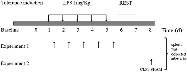 Lipopolysaccharide-induced tolerance in mice.