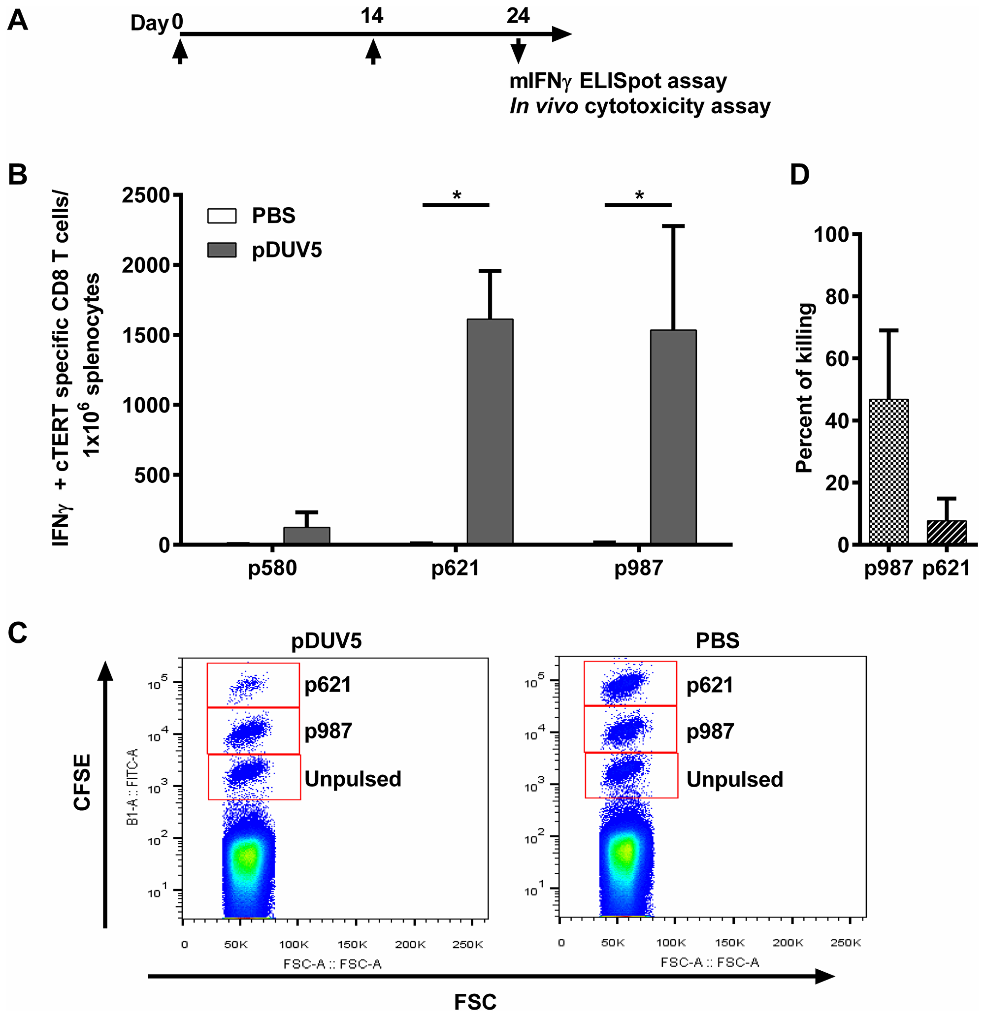 pDUV5 induces cTERT cytotoxic specific T-cell responses in mice.