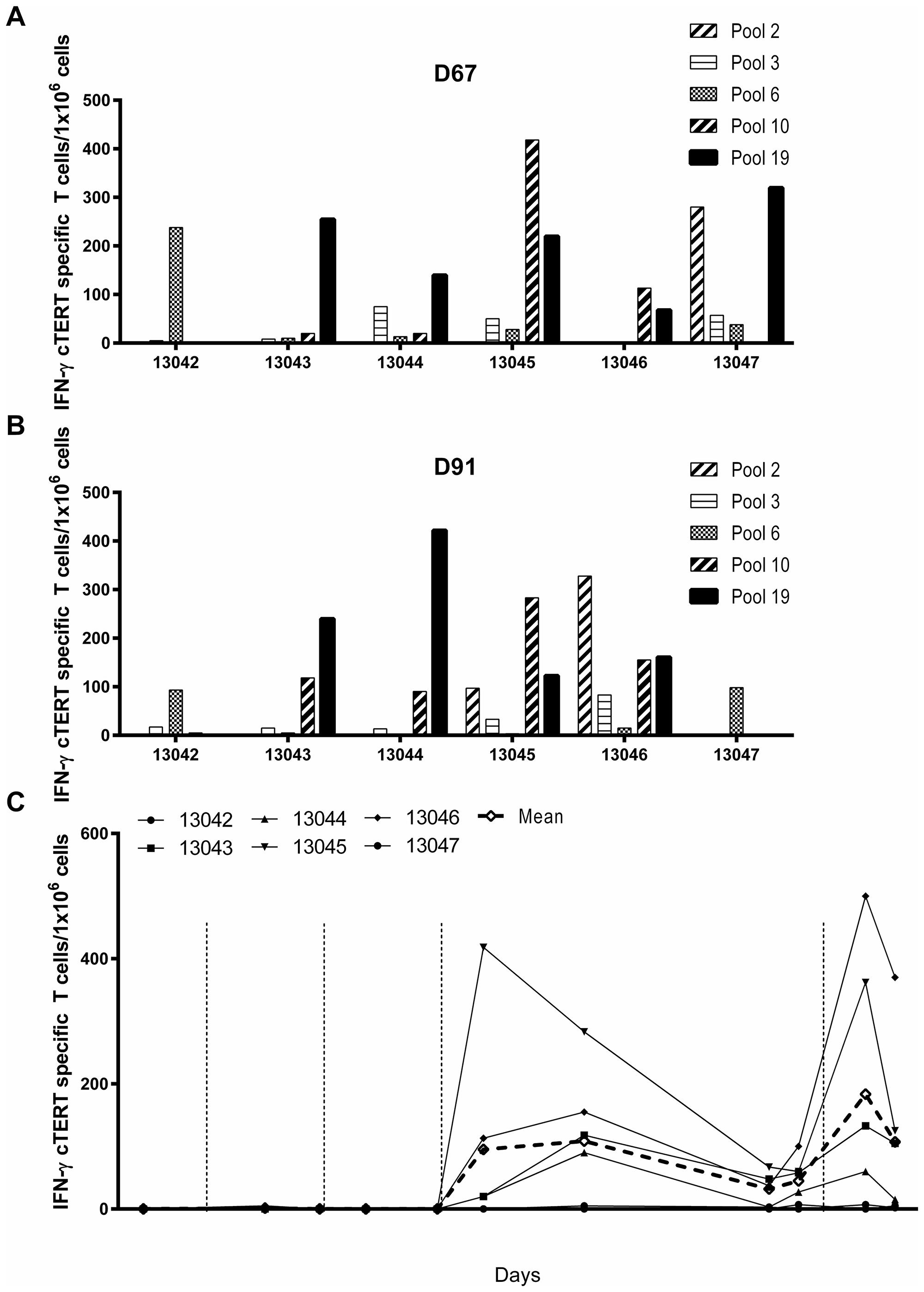 Immunogenicity of pNTC-DUV5 in beagle dogs.