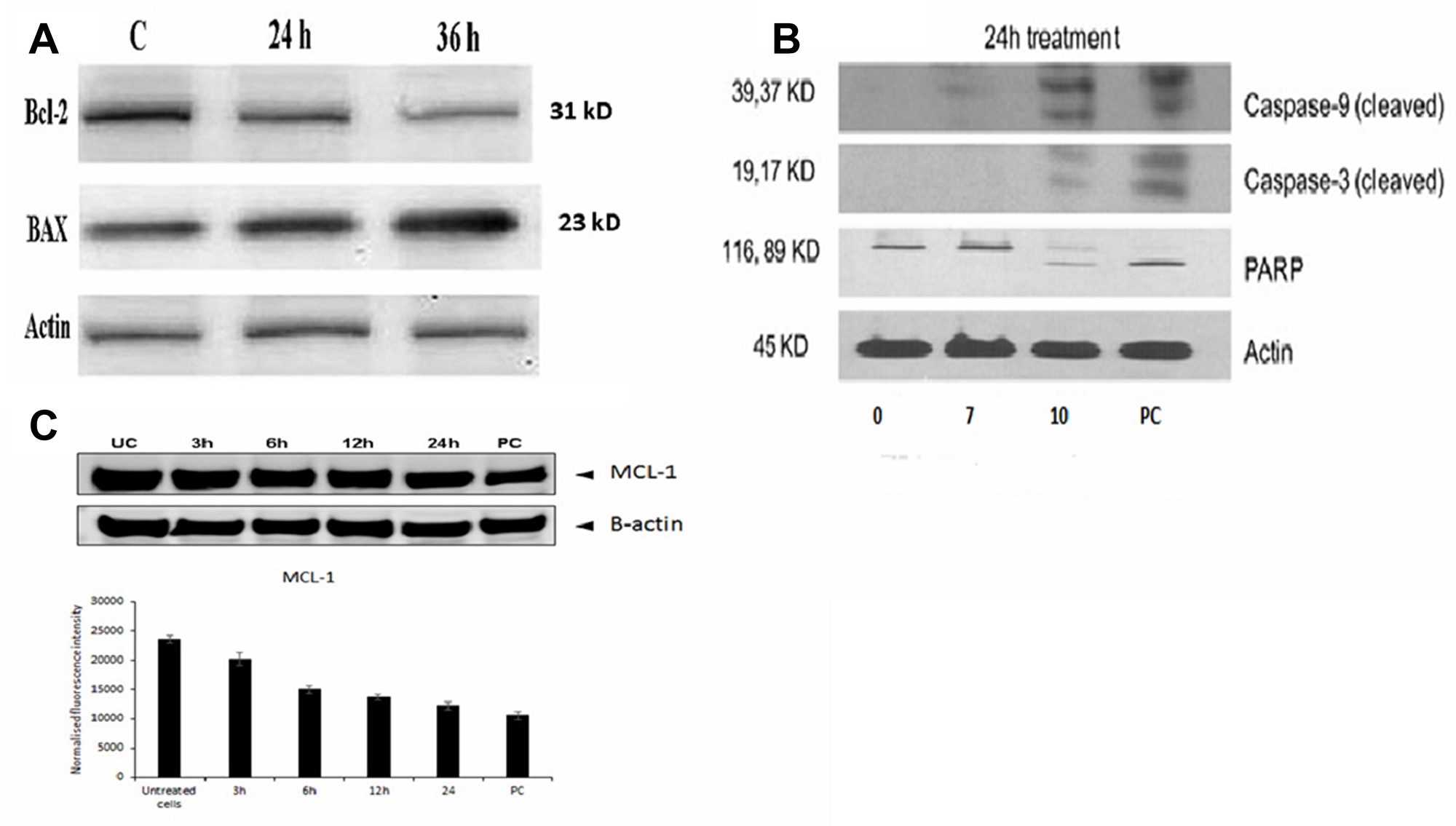 Molecular mechanism of FEO induced apoptosis in B16-F10 and FM94 cells.
