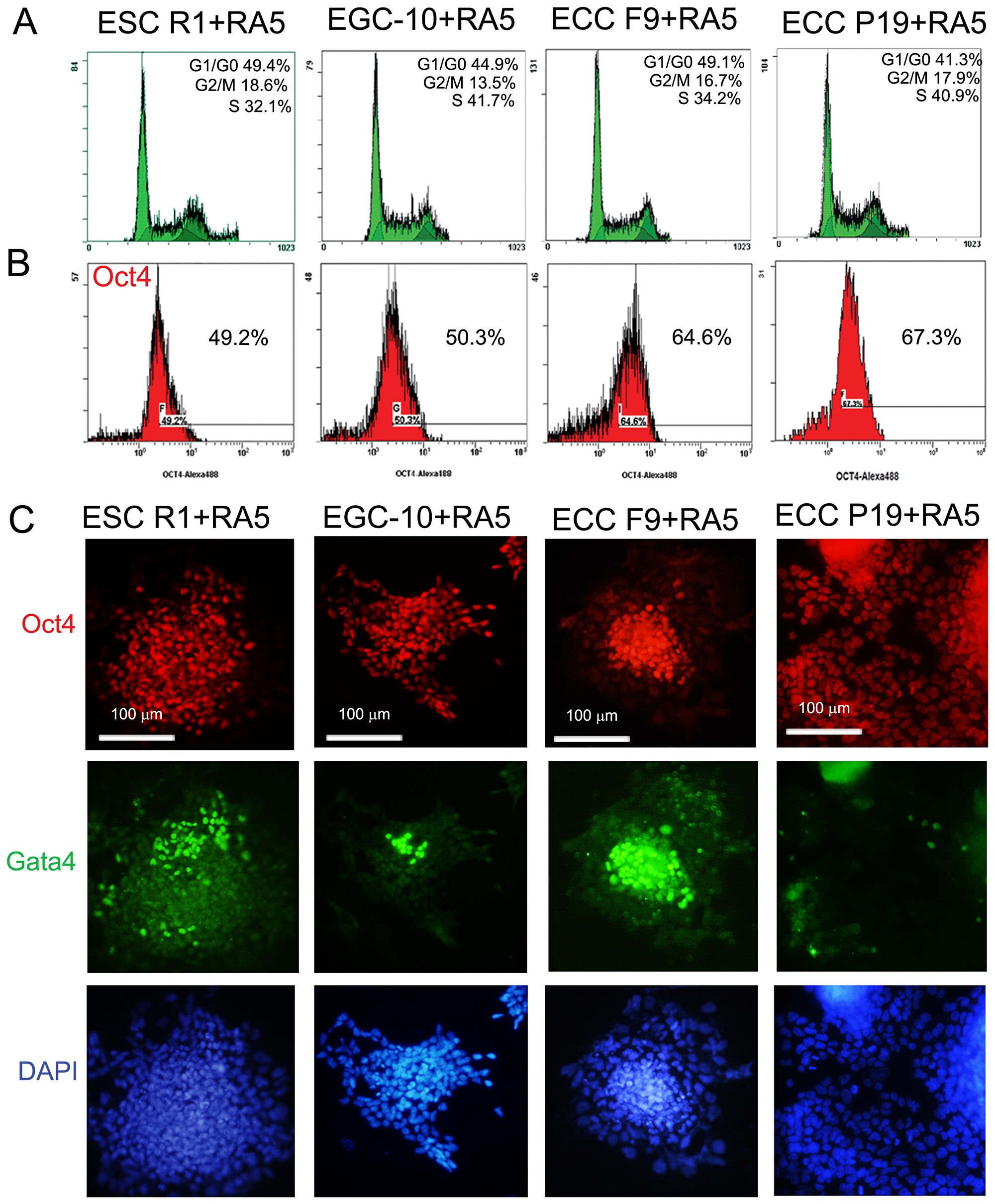 ESC, EGC and ECC population characteristics during RA-induced differentiation.