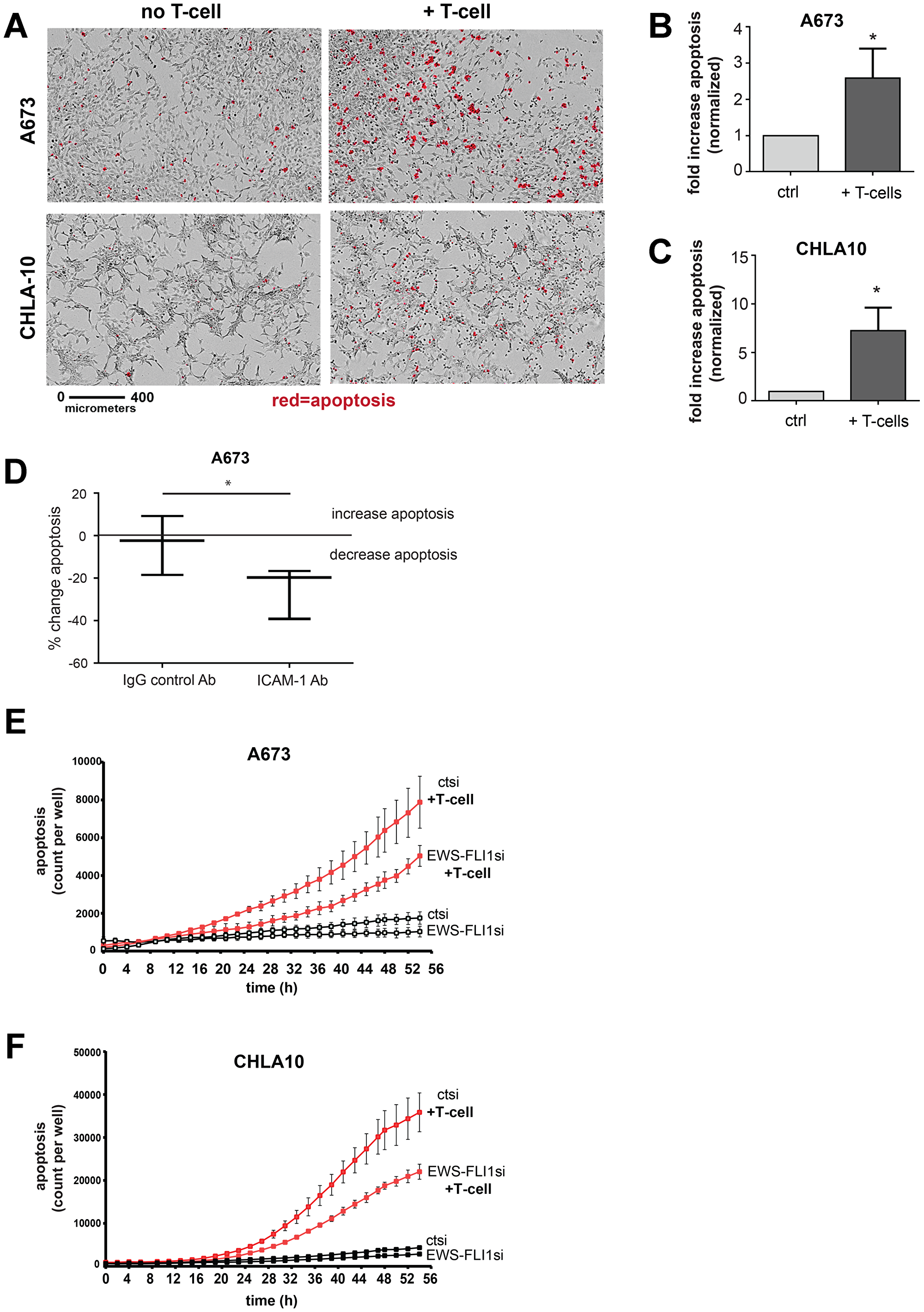 Ewing tumor cells with lower EWS-FLI1 level are more resistant to T-cell mediated apoptosis.