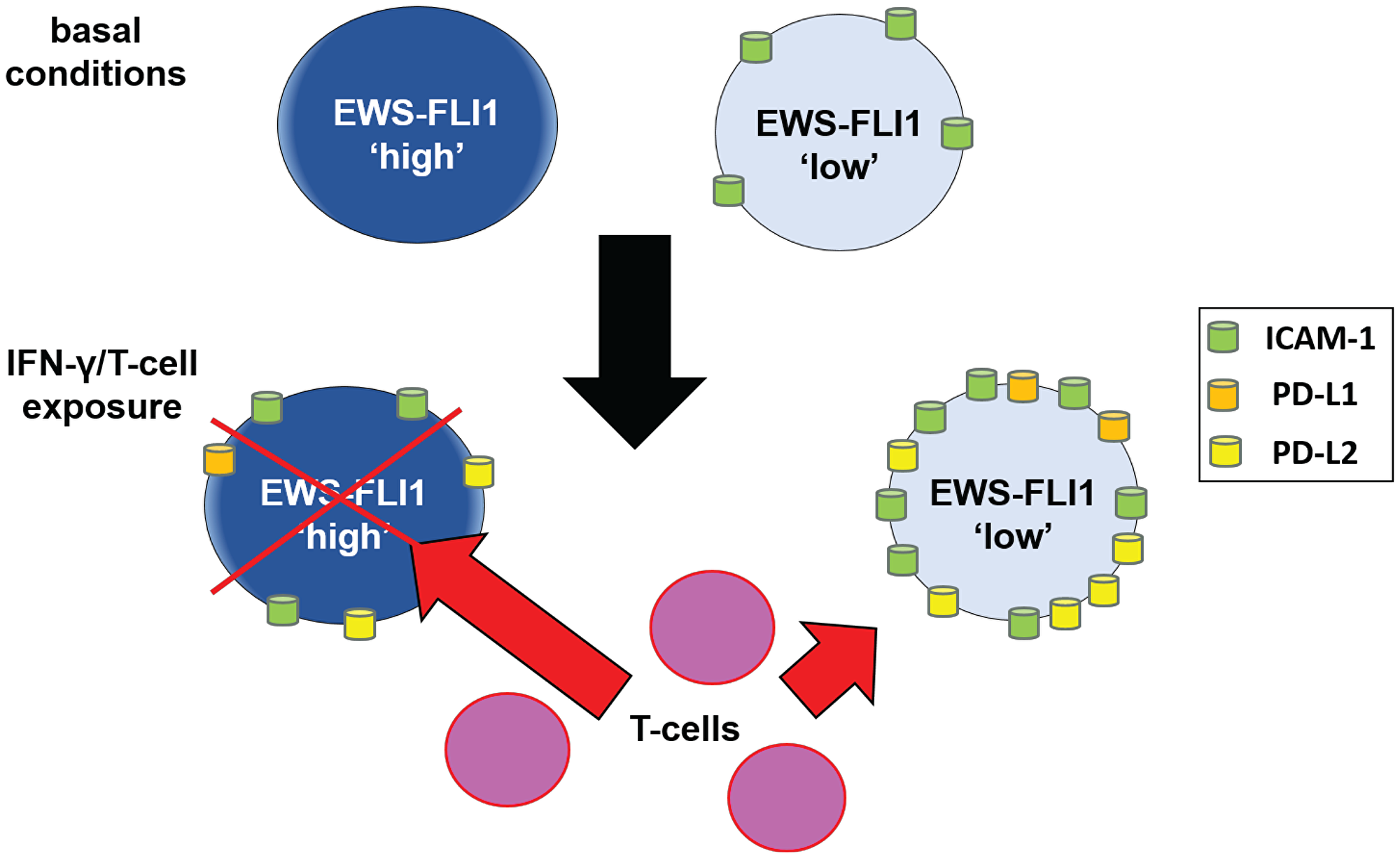 Schematic: proposed mechanism by which cells in the EWS-FLI1 low state demonstrate reduced sensitivity to T-cell mediated tumor cell apoptosis.